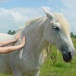 Equine Reiki | Reiki for pets