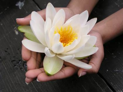 Reiki Healing Hands - Everything about Reiki